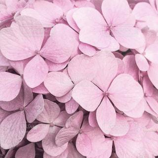 近くの花のアップの写真・画像素材[1850761]