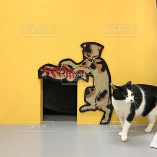 白い壁の上に座っている猫の写真・画像素材[1851213]