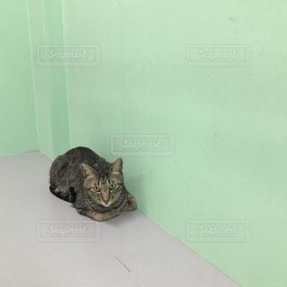 地面に横になっている猫の写真・画像素材[1851214]