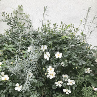 近くのフラワー ガーデンの写真・画像素材[1868704]