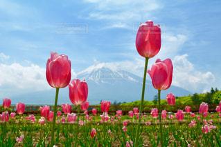 フィールドに赤い花の写真・画像素材[1873262]