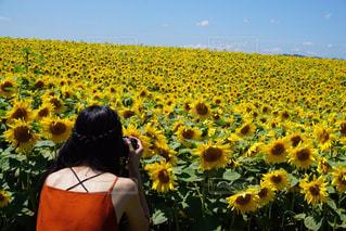フィールド内の黄色の花の写真・画像素材[1874299]