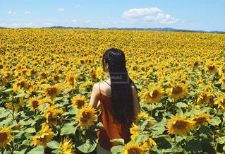 黄色の花の人の写真・画像素材[1874300]