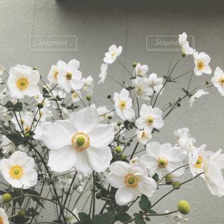 テーブルの上の花の花瓶の写真・画像素材[1874724]