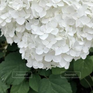 花のクローズアップの写真・画像素材[2316961]