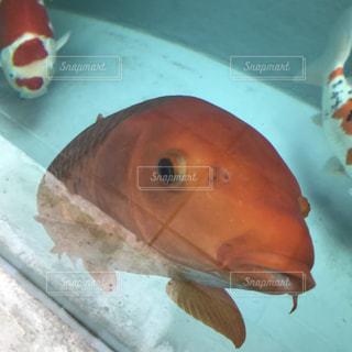 水の下を泳ぐ魚の写真・画像素材[2414537]