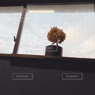 花の写真・画像素材[2646895]