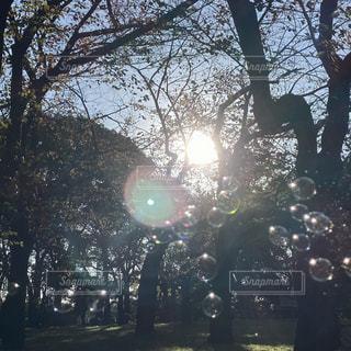木の横の信号の写真・画像素材[2741078]