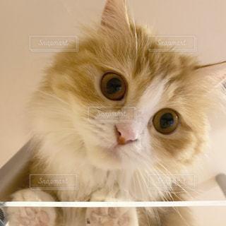 猫の写真・画像素材[2748596]