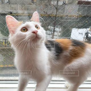猫の写真・画像素材[2748600]
