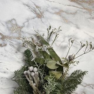 植物の花瓶の写真・画像素材[2788400]