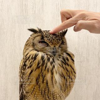 鳥を抱いている人の写真・画像素材[2811452]