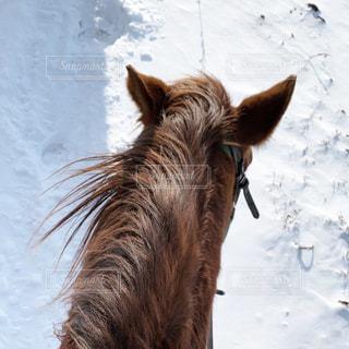 馬が雪の中に立っているの写真・画像素材[2849468]