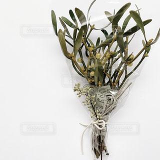 植物の花瓶の写真・画像素材[2903556]