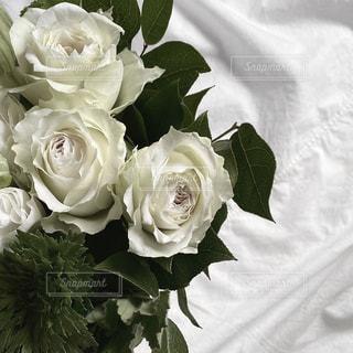 花のクローズアップの写真・画像素材[2980971]