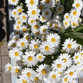 黄色い花のクローズアップの写真・画像素材[3081041]
