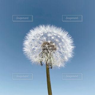 植物のクローズアップの写真・画像素材[3175486]