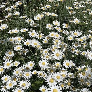 花園のクローズアップの写真・画像素材[3175509]