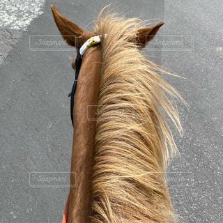 道路の側にある馬のクローズアップの写真・画像素材[3510489]