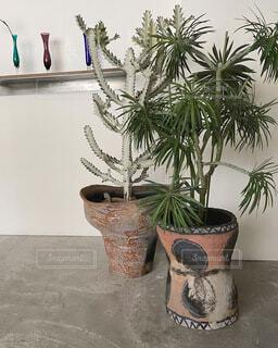 ヤシの木の隣に花瓶の写真・画像素材[4065657]