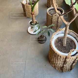 バナナの木の上の鍋の写真・画像素材[4156512]