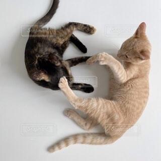 空中に飛び込む猫の写真・画像素材[4691234]