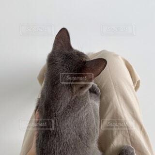 猫のクローズアップの写真・画像素材[4691236]