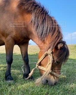芝生で覆われた畑の上に立っている茶色の馬の写真・画像素材[4735950]