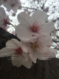 自然の写真・画像素材[64215]