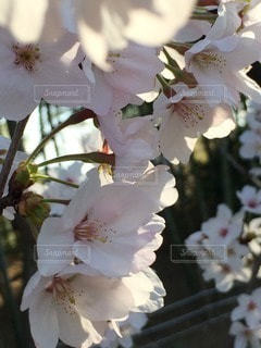自然の写真・画像素材[64216]