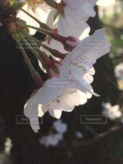 自然の写真・画像素材[64218]