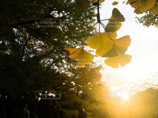 秋を感じるの写真・画像素材[1852810]