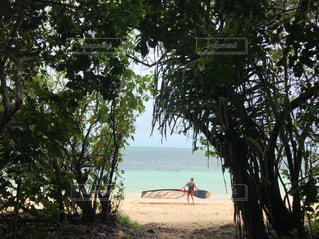 木の隣にビーチの上を歩く人々 のグループの写真・画像素材[1852612]