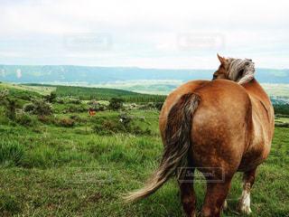 馬のおしりの写真・画像素材[1853278]