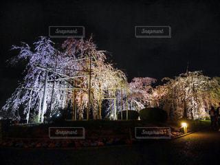 枝垂れ桜の写真・画像素材[1881196]