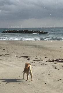 雪のちらつくビーチの上を歩く犬の写真・画像素材[1853520]
