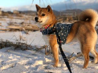 愛犬と冬の散歩の写真・画像素材[1853521]
