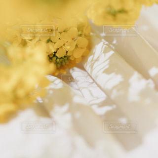 菜の花スカートの写真・画像素材[1853996]