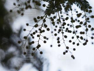 近くの木のアップの写真・画像素材[1853997]