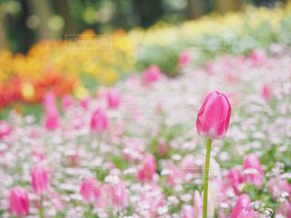 植物にピンクの花の写真・画像素材[1853998]