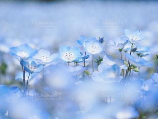 近くの花のアップの写真・画像素材[1853999]