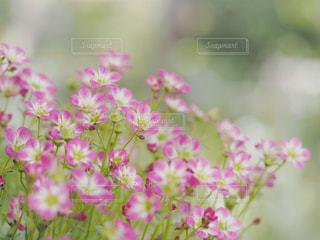 植物にピンクの花の写真・画像素材[1854000]