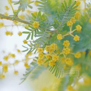 近くの花のアップの写真・画像素材[1854002]