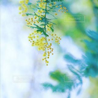 近くの花のアップの写真・画像素材[1854004]