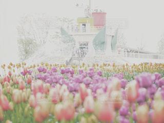 近くの花のアップの写真・画像素材[1854013]