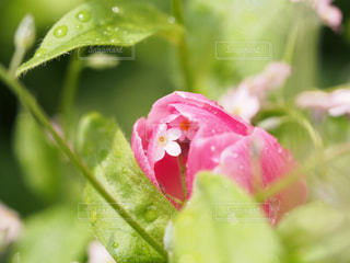 近くに緑の葉とピンクの花のアップの写真・画像素材[1854014]