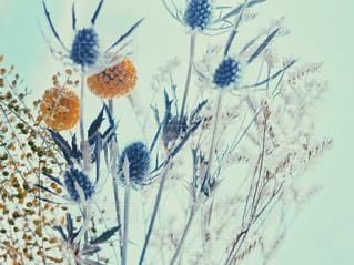 近くの花のアップの写真・画像素材[1854078]