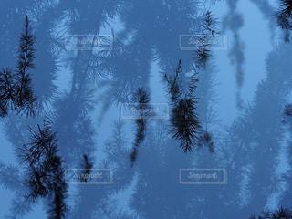 静けさの写真・画像素材[2149824]