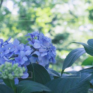 花の写真・画像素材[2149827]