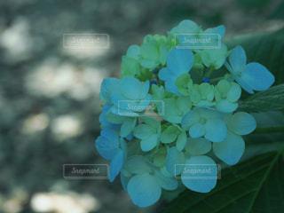 花の写真・画像素材[2149833]